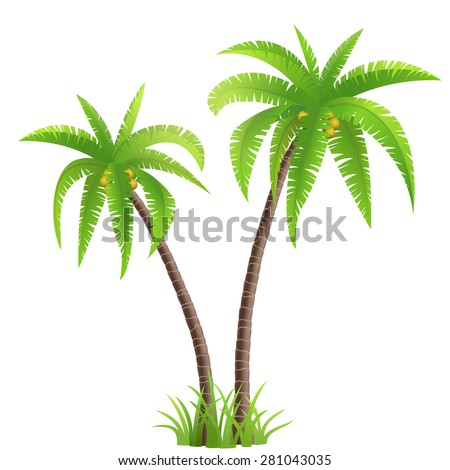 Two coconut palm trees with grass isolated on white background - stock vector