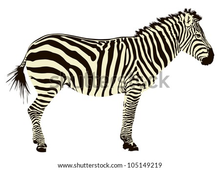 Zebra Silhouette Stock...