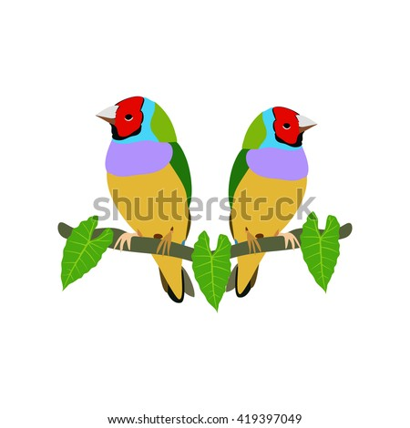 Two colorful Gouldian Finch on the tree branch isolated on white background.