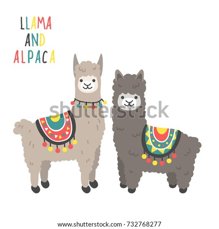 two cute llamas standing smiling isolated stock vector 732768277