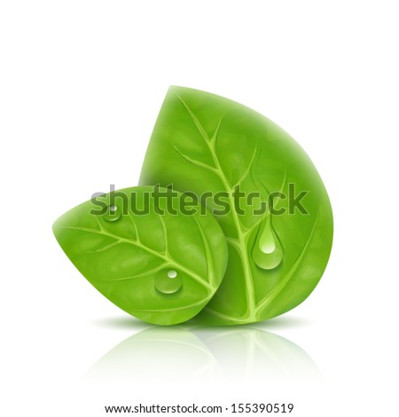 Two green leaves isolated with drops of water, shadow and reflection - stock vector