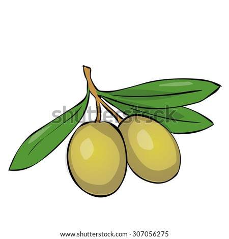 Two green olives on branch with leaves. Hand drawn vector illustration. Isolated on white - stock vector