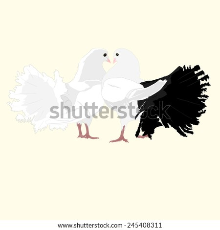Two lovers dove. - stock vector
