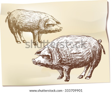 Two pigs in the hand drawing - stock vector
