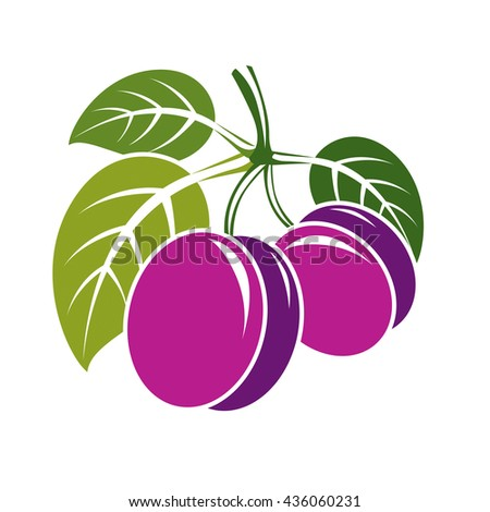Two purple simple vector plums with green leaves, ripe sweet fruits illustration. Healthy and organic food, harvest season symbol.  - stock vector