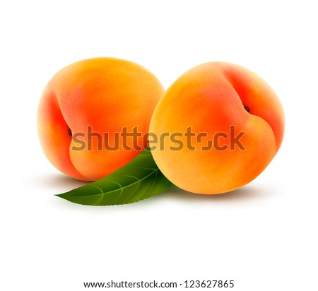 Two ripe peach fruit with leaves. Vector illustration. - stock vector