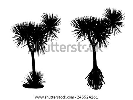 two silhouette pandanus trees on white background - stock vector