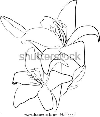 two simple lily flowers on a white background - vector illustration - stock vector