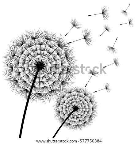 Two Stylized Black Dandelions With Flying Fluff On White Background Floral Stylish Modern Wallpaper