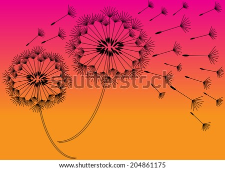 two vector dandelions in sunset