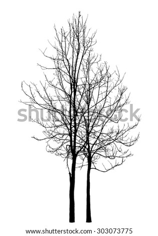 Two winter trees on a white background : vector