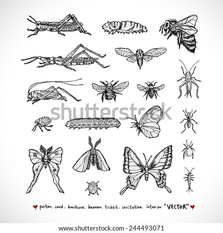 Types of animal / Hand drawn illustrations - vector - stock vector
