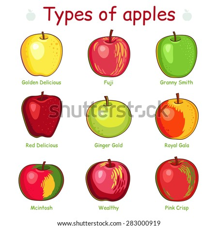 Types of apples. Apples in vector isolated on white background.  - stock vector