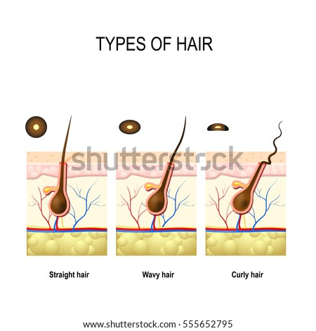 Hair Follicle Stock Images Royalty Free Images Amp Vectors