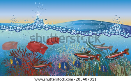 Underwater tropical background  vector illustration - stock vector