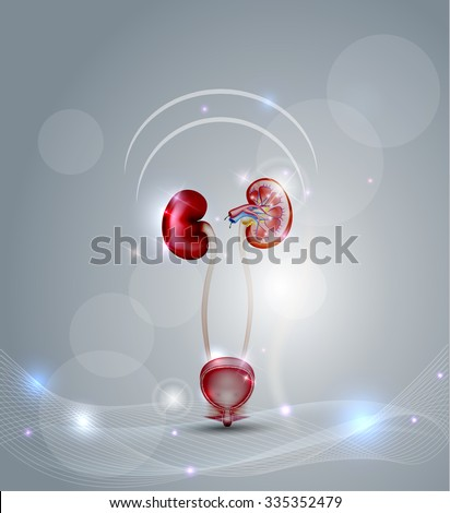 Urinary bladder and kidneys on an abstract light grey background.