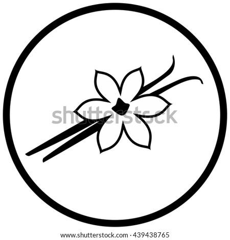 Vanilla flower and pods vector illustration - stock vector