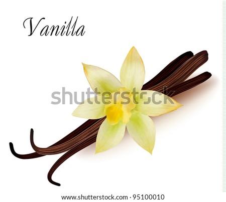 Vanilla pods and flower. Vector illustration. - stock vector