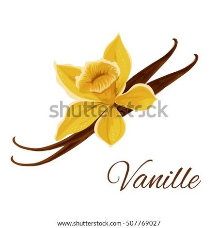 Vanille vector icon vanilla pod flower stock vector 2018 507769027 shutterstock