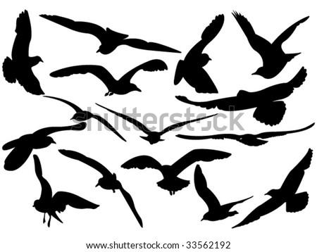 variety flying sea-gulls vector illustration - stock vector