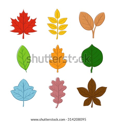 Various autumn leaves in hand drawn vector illustration