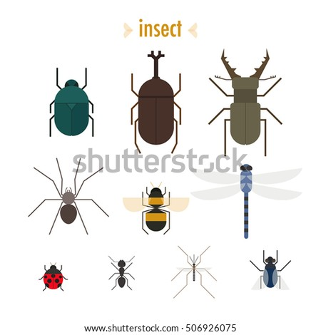 various insect vector illustration flat design