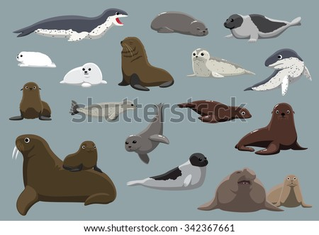 Various Seals Set Cartoon Vector Illustration - stock vector