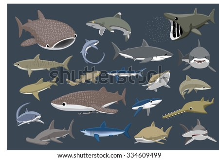 Various Sharks Set Cartoon Vector Illustration - stock vector