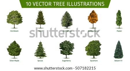 Types Of Tree Forms Pictures To Pin On Pinterest Pinsdaddy