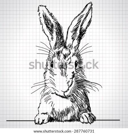 Vector adorable hand-drawn rabbit - stock vector