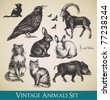 Vector animals set - raven, cats, flying birds, rabbits, boar, goat - stock photo