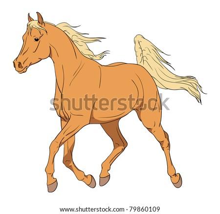 Vector Arabian horse illustration - stock vector