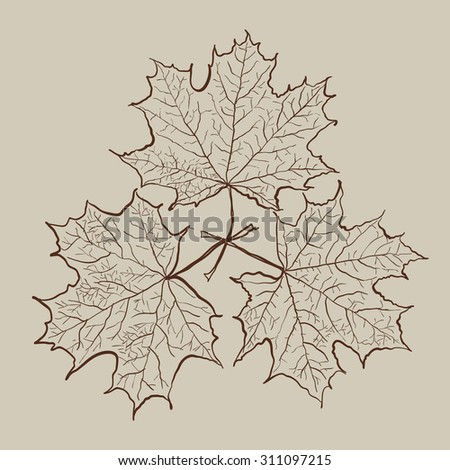 Vector autumn maple leaves vintage composition - stock vector