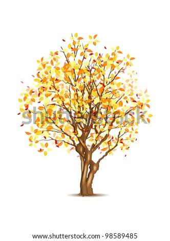 Vector autumn tree isolated on white, vector illustration, eps10, three layers, easy editable - stock vector