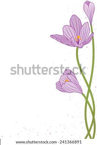 vector background with flowers of crocus - stock vector