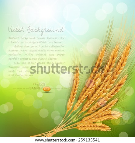 vector background with gold ears of wheat and sun rays  - stock vector