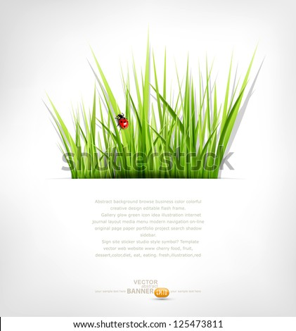 vector background with green grass and ladybug - stock vector