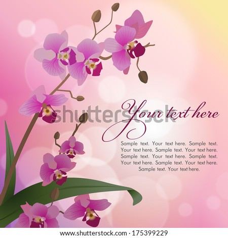 Vector background with orchids - stock vector