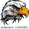 Vector Bald Eagle or Hawk Head Mascot Graphic - stock vector