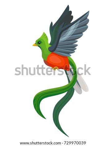 Quetzal Bird Flying Quetzal Bird Stock Ima...
