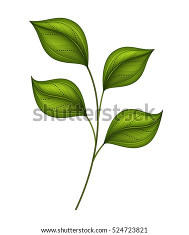 Vector Beautiful Leaf, Object Isolated on White Background. Floral Design Element