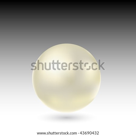 vector beautiful white pearl - stock vector