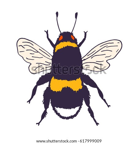 Vector Bee Illustration Hand Drawn Ink Sketch With Bumblebee Insect Wild Animal Drawing