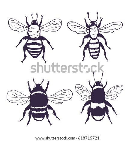 Vector Bees Set Illustration Hand Drawn Ink Sketch With Bumblebee Insect Wild Animal Black