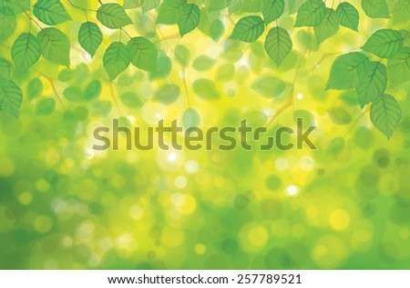 Vector birch's leaves on spring  bokeh background. - stock vector