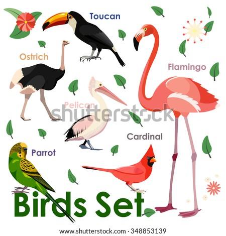 Vector bird icons. Colorful realistic birds. Parrot, flamingo, ostrich, toucan, pelican and flamingo.  Flat birds. Vector birds. Birds design. Bird elements - stock vector