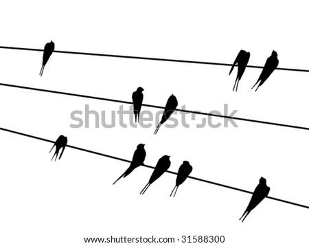 vector bird silhouettes - stock vector