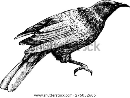 Vector bird. White and black. - stock vector