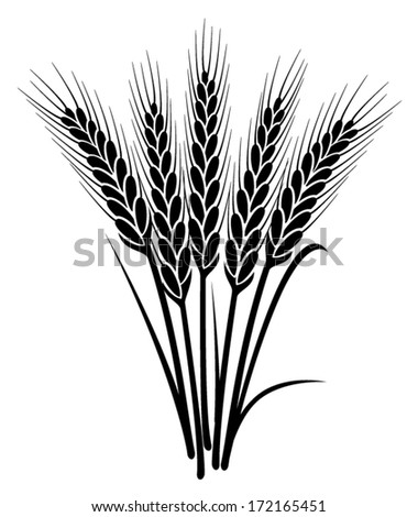 vector black and white bunch of wheat ears with whole grain and leaves - stock vector