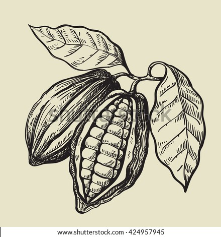 vector black cacao beans on beige background - stock vector